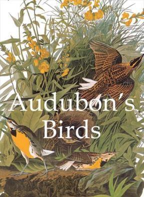 E-book Audubon'S Birds