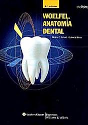 Papel Woelfel. Anatomia Dental