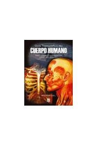 Papel Guia Topografica Del Cuerpo Humano