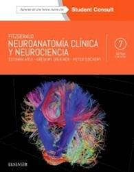 Papel Fitzgerald. Neuroanatomía Clínica Y Neurociencia