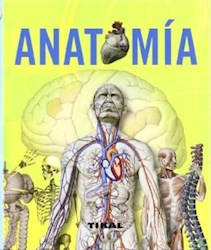 Papel Anatomia