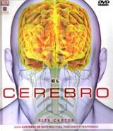 Papel Cerebro, El