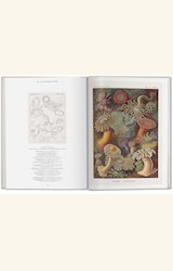 Papel THE ART AND SCIENCE OF ERNST HAECKEL